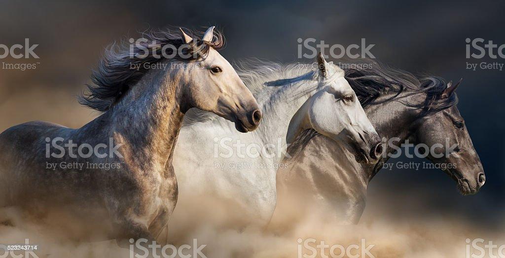 Horses portrait in dust stock photo