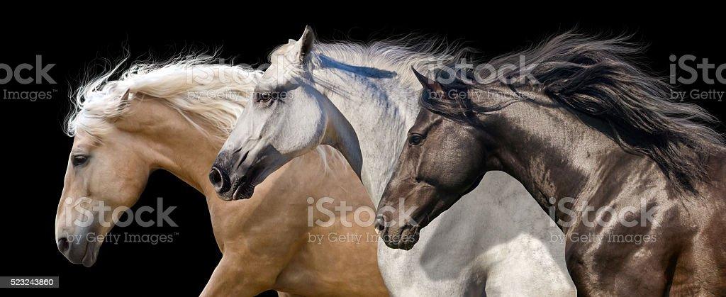 Horses portrait in motion stock photo