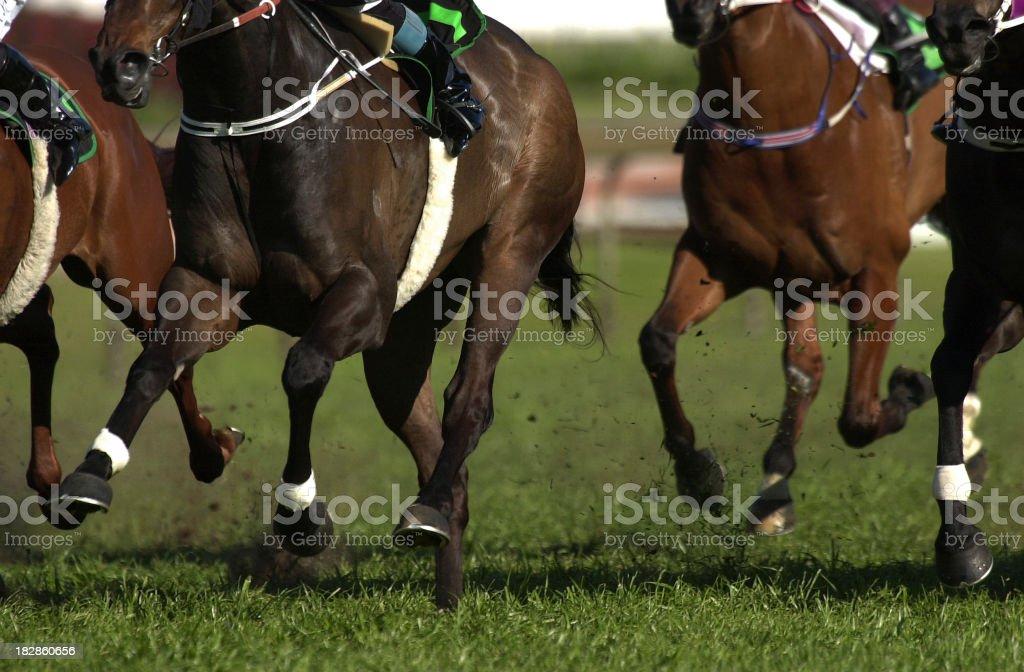 Horses racing on turf stock photo