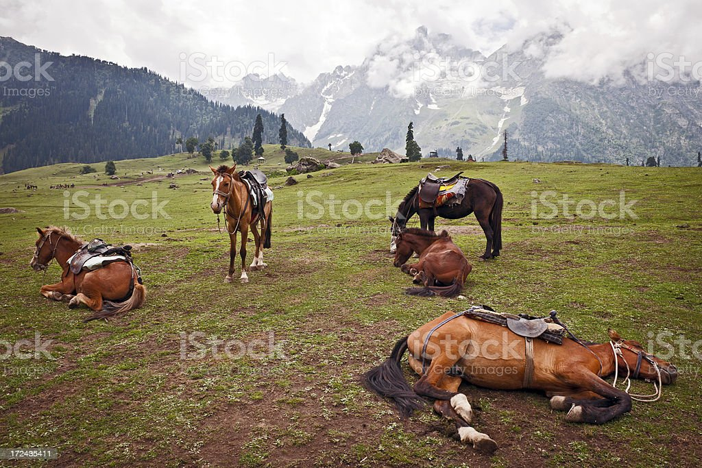 Horses Resting in Kashmir North India royalty-free stock photo