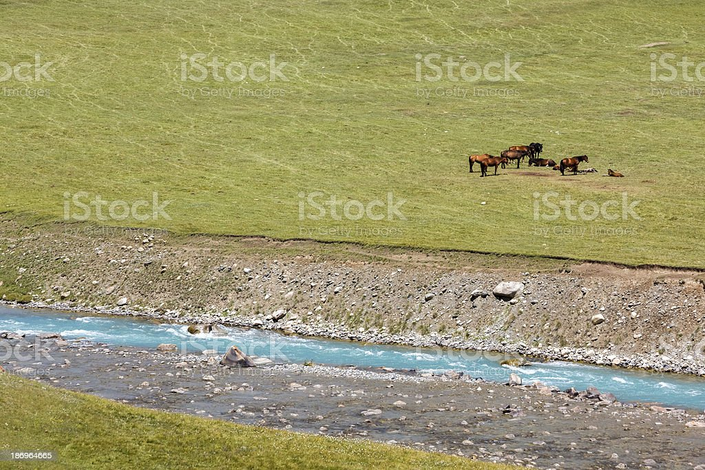 Horses resting near blue river royalty-free stock photo