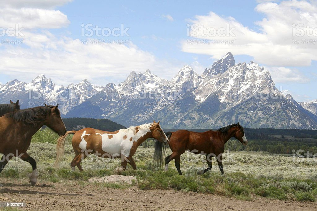 Horses Running Along Mountains stock photo