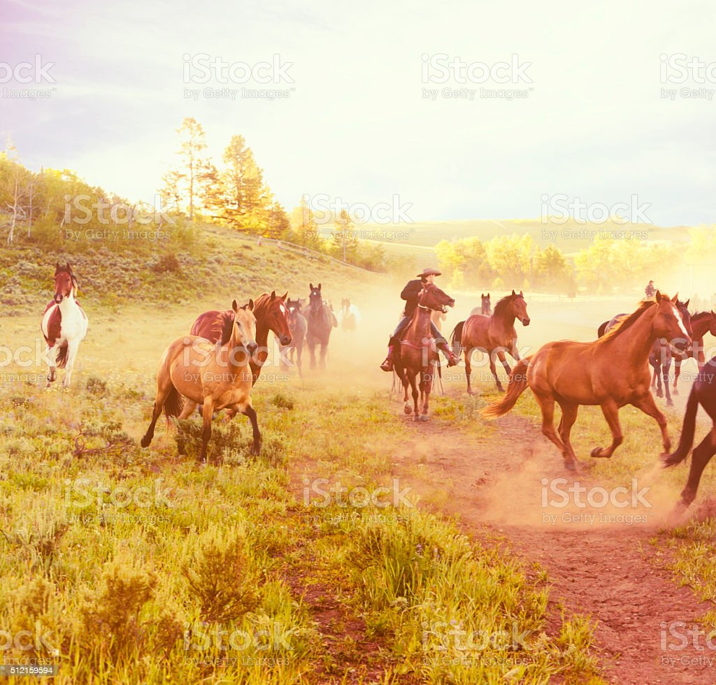 Horses Running At Dawn On A Ranch stock photo