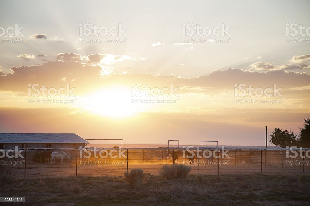 Horses Running at Sunset royalty-free stock photo