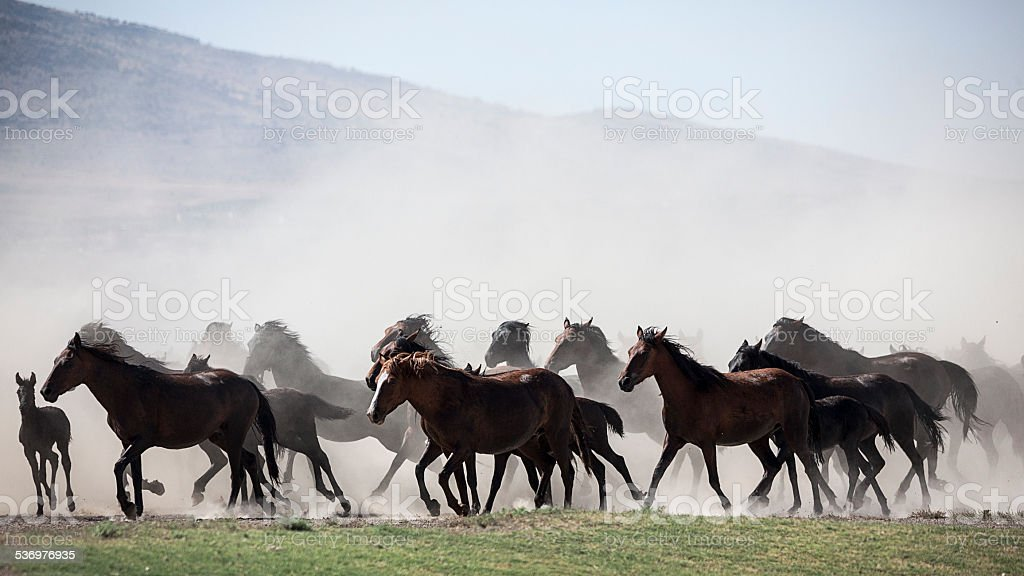 Horses Running in Cloud of Dust stock photo