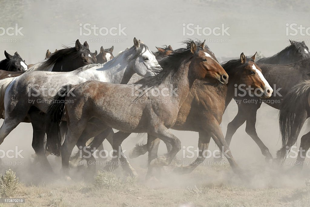 Horses Running stock photo
