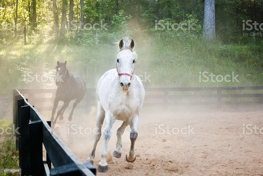 Horses running through dust cloud stock photo