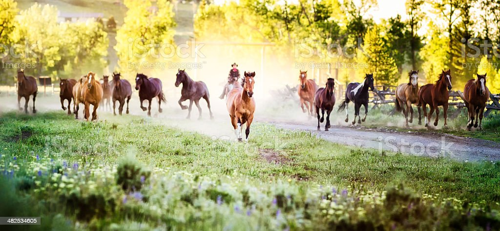 Horses running to pastures stock photo