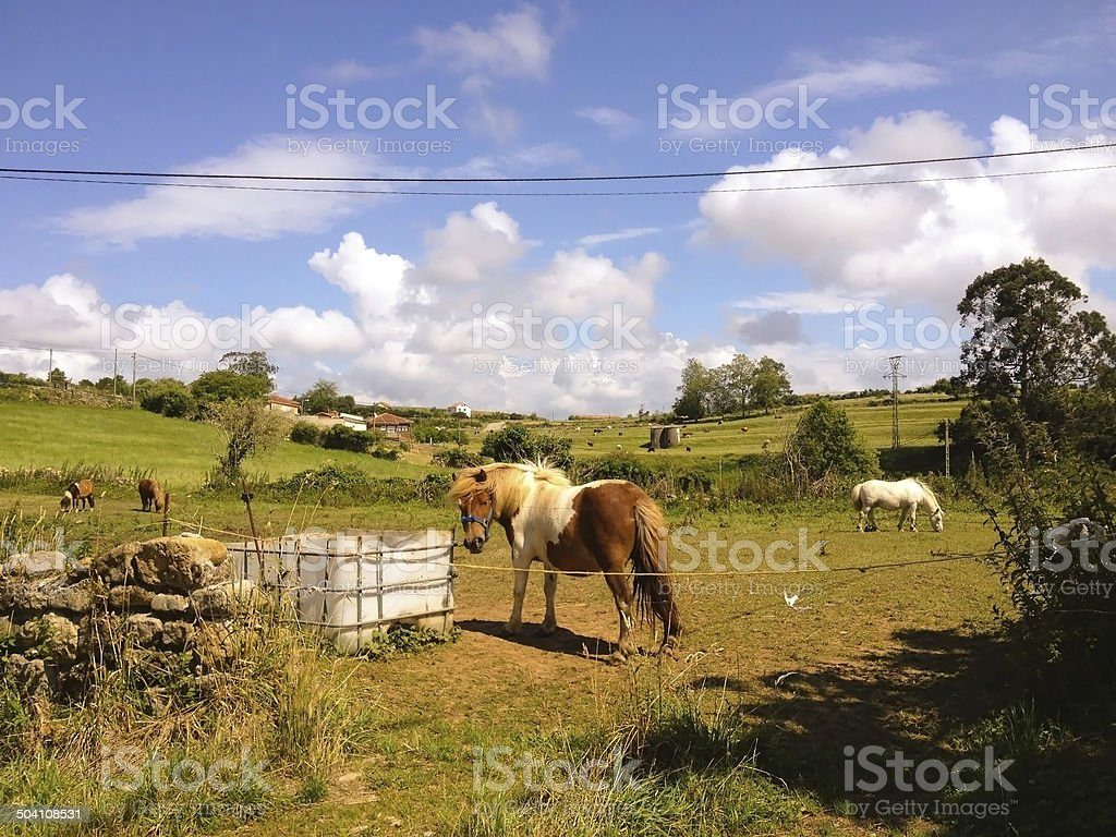 Horses, Santillana del Mar, Spain stock photo