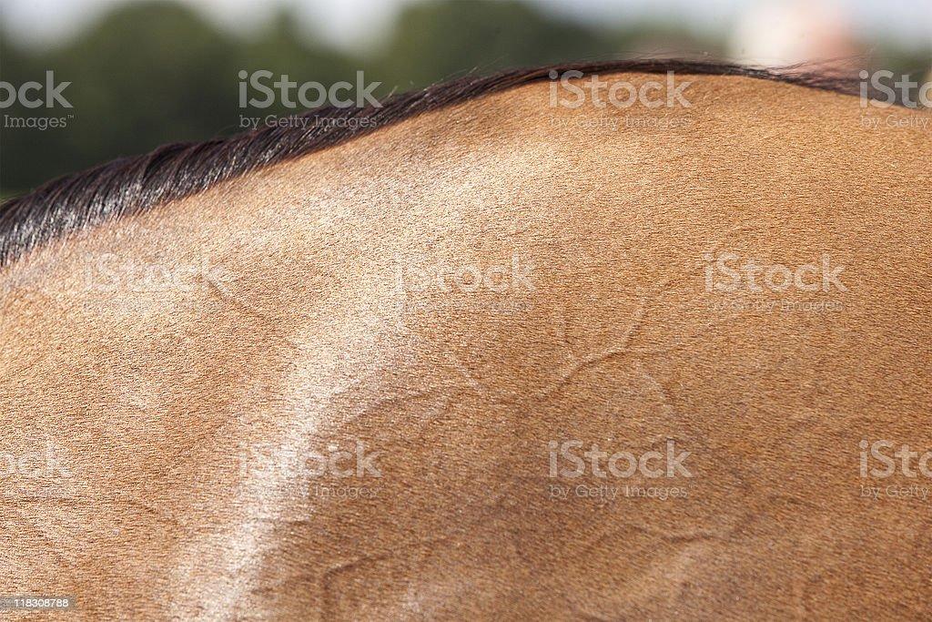 Horse's skin royalty-free stock photo