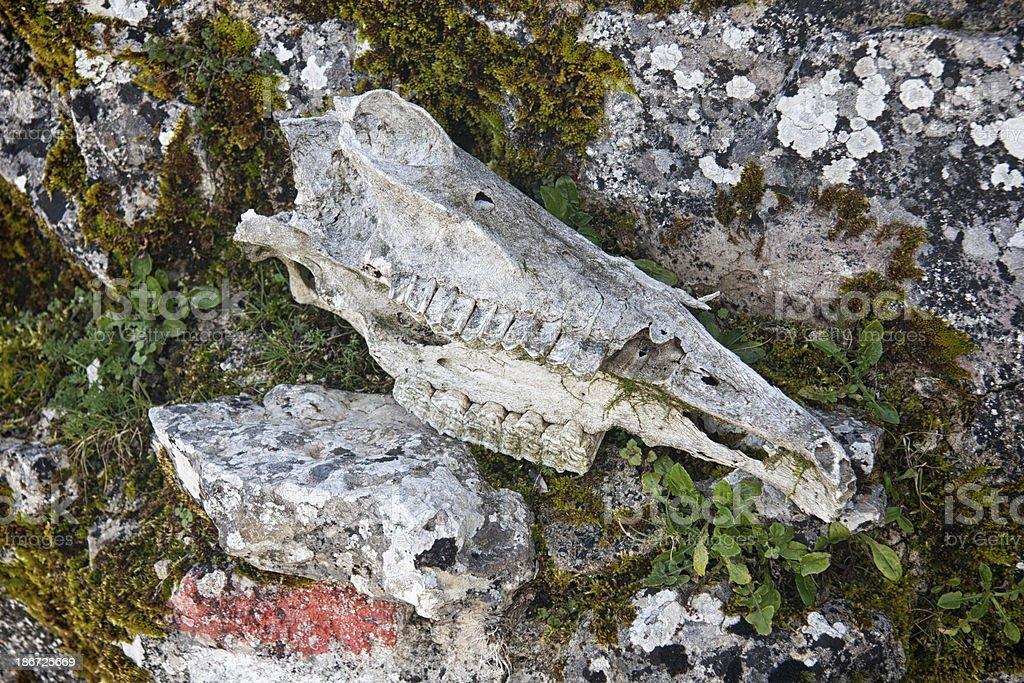 Horse's skull stock photo