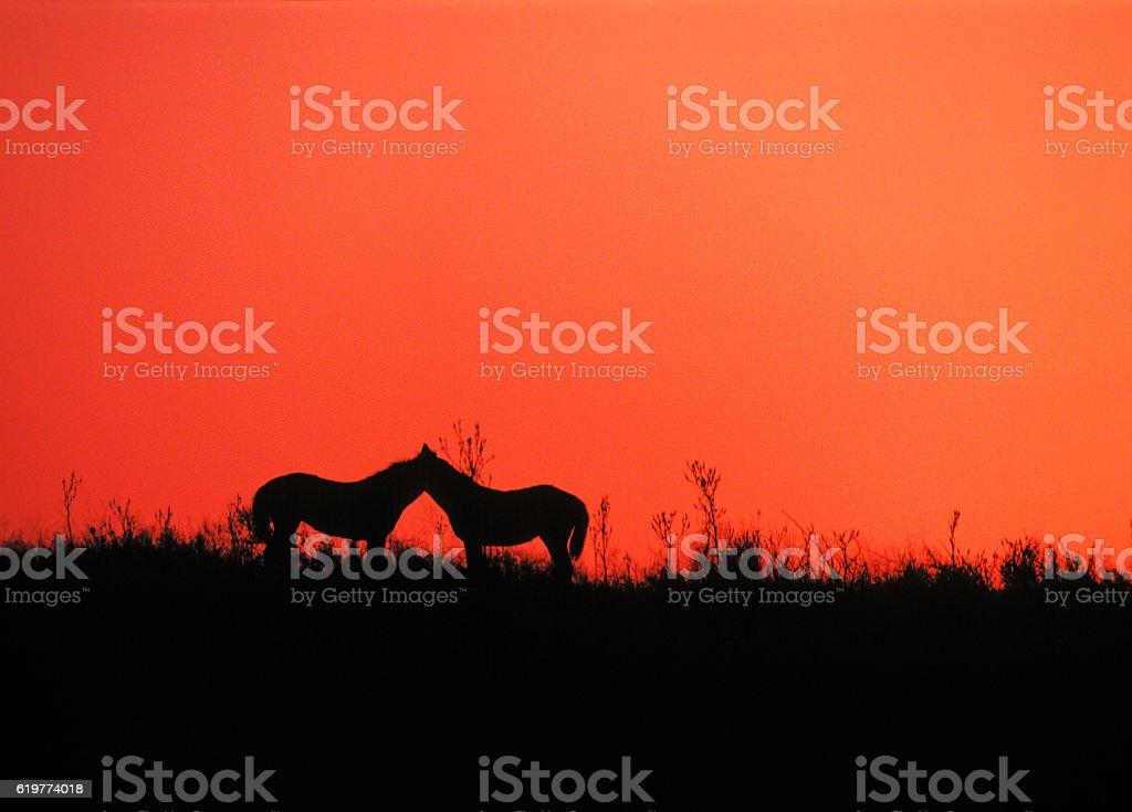 Horses sleep on the steppe at dawn stock photo