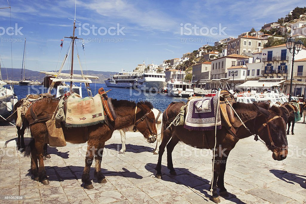 Horses standing by the harbor of Hydra, Greece stock photo