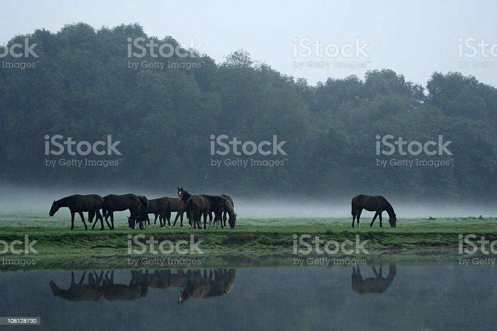Horses Standing Outside Forest Near Pond royalty-free stock photo