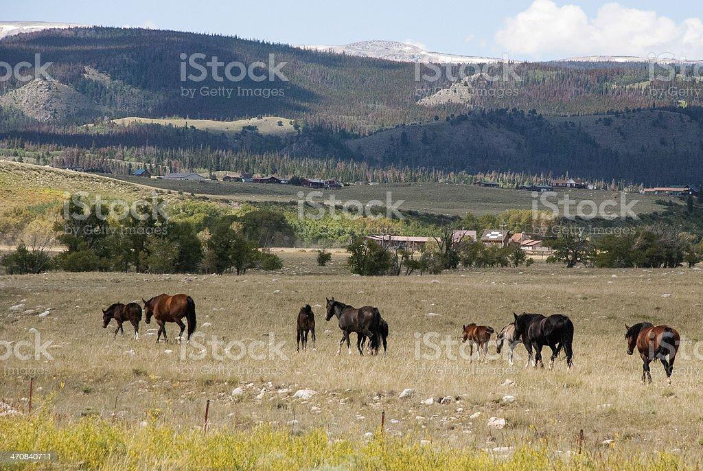 Horses summer pasture below Snowy Range near Centennial Wyoming stock photo