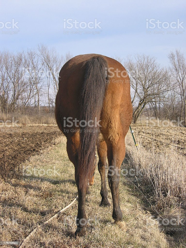 Horses' Tail royalty-free stock photo