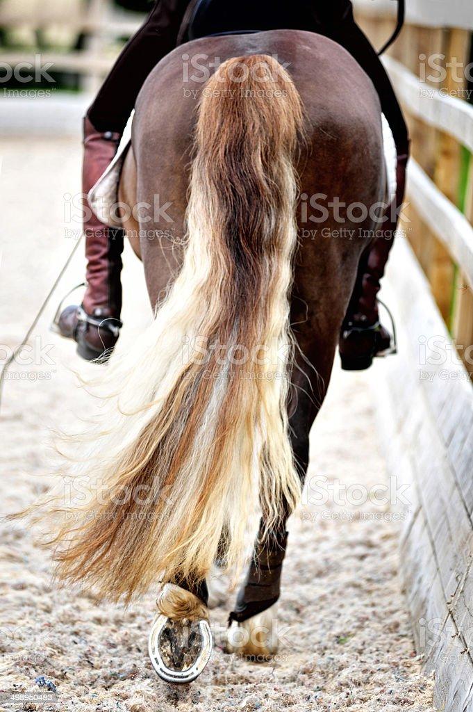 Horse's tail swishing stock photo