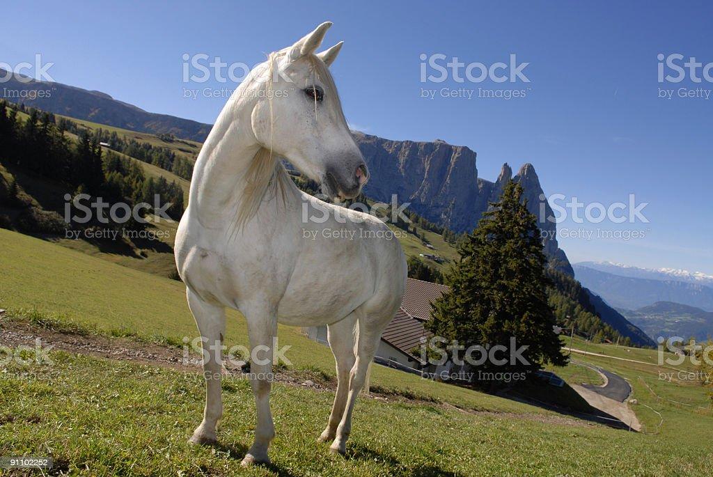 horses white stock photo