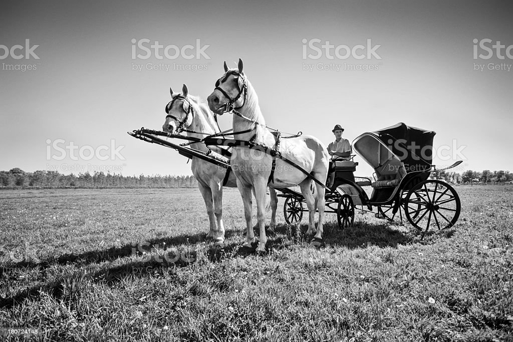 Horses with carriage royalty-free stock photo