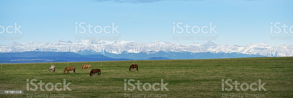 Horses with Mountain view stock photo