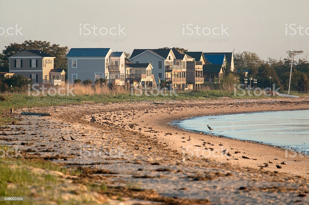Horseshoe crabs herons shorebirds Slaughter Beach homes Delaware Bay stock photo