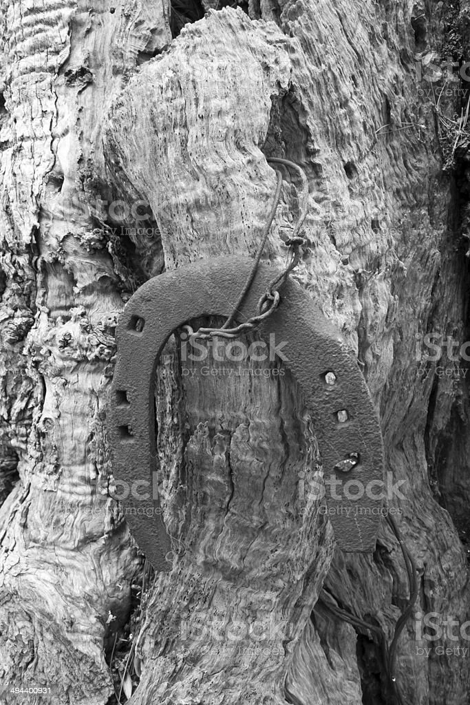 Horseshoe hanging to olive tree . royalty-free stock photo