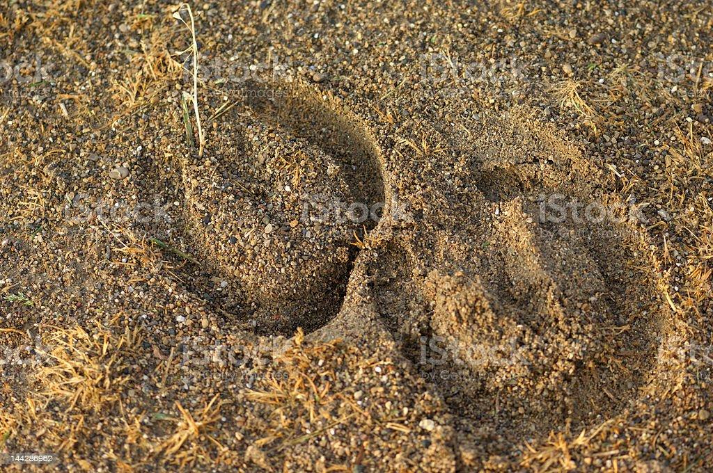 Horseshoe imprints royalty-free stock photo