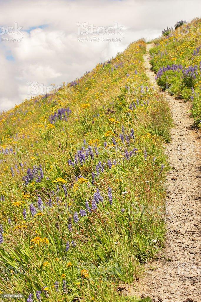 Horsethief Trail San Juan Mountains Hike stock photo