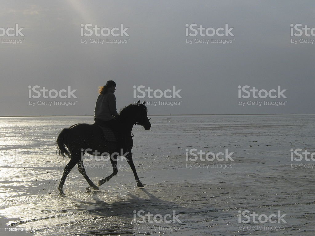 Horsewoman at low tide royalty-free stock photo