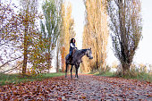 horsewoman rides his horse to the country roads in autumn
