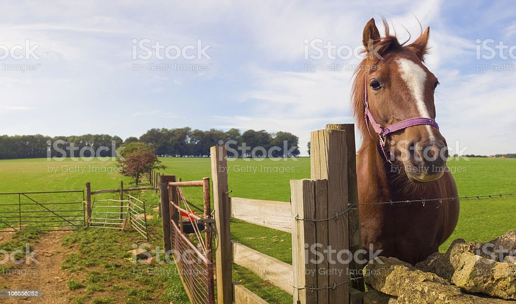 Horsing around stock photo