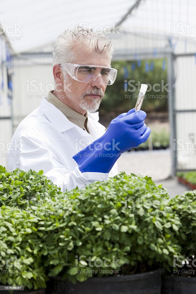 Horticulture royalty-free stock photo