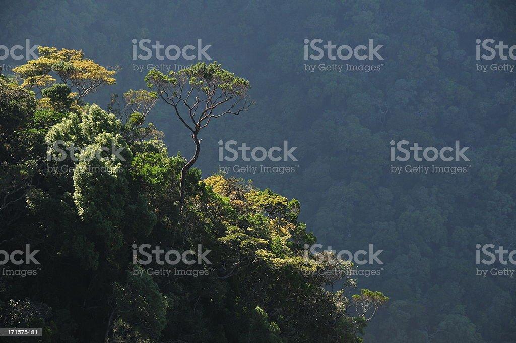 Horton plains National Park, Sri Lanka. royalty-free stock photo