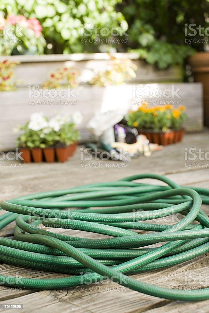 A hose stock photo