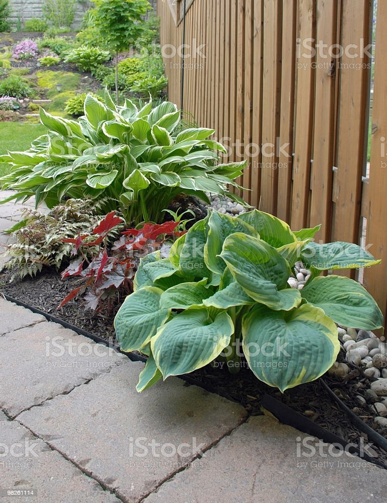 Hosta Garden stock photo