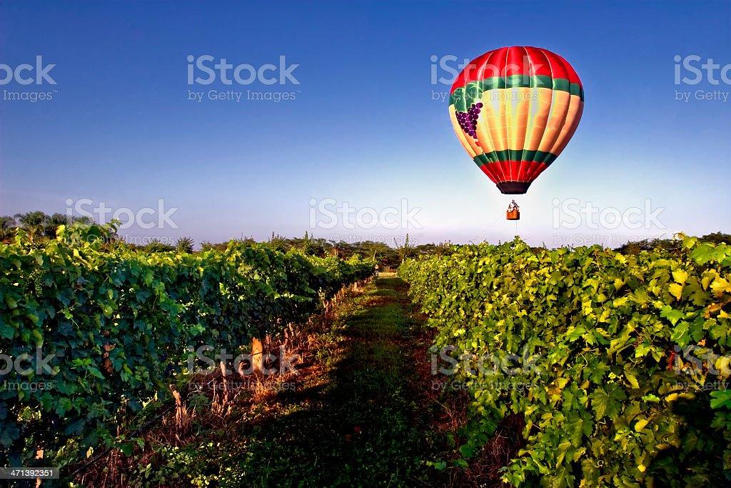 A hot air balloon over a grape vineyard stock photo