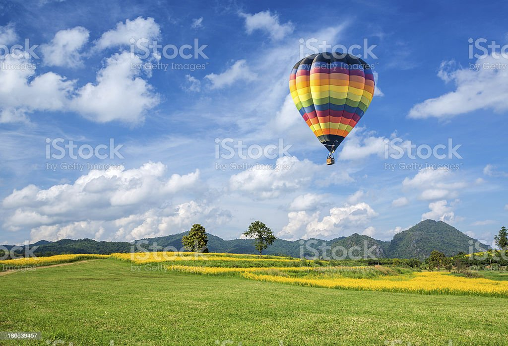 Hot air balloon over the yellow flower field stock photo
