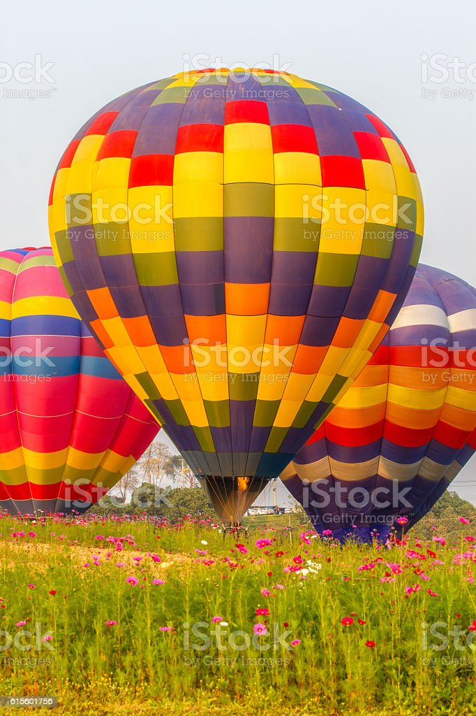 Hot air balloons floating over cosmos flowers field stock photo
