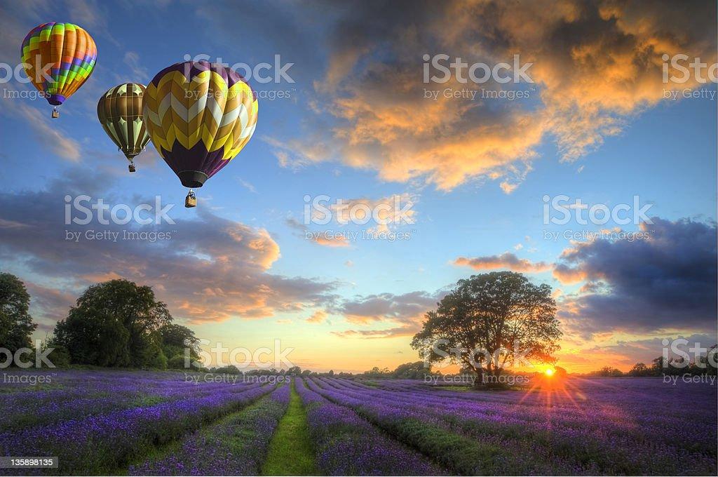 Hot air balloons flying over lavender landscape sunset stock photo
