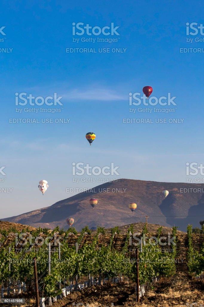 Hot air balloons launch at California vineyard stock photo