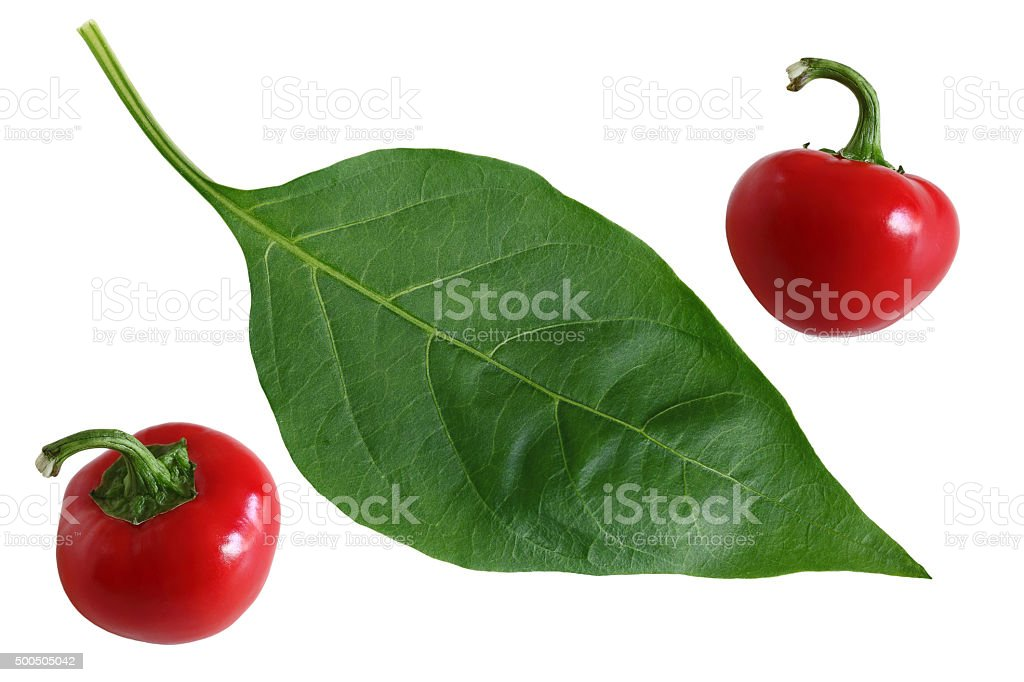 Hot cherry Pepper and Leaf stock photo