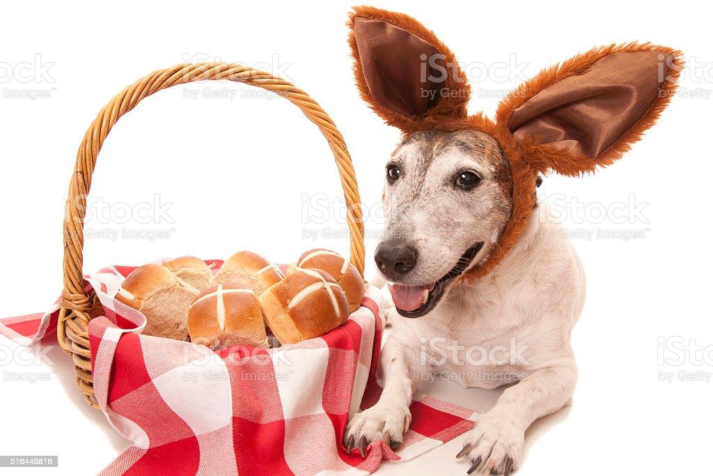 Hot Cross Buns Dog stock photo