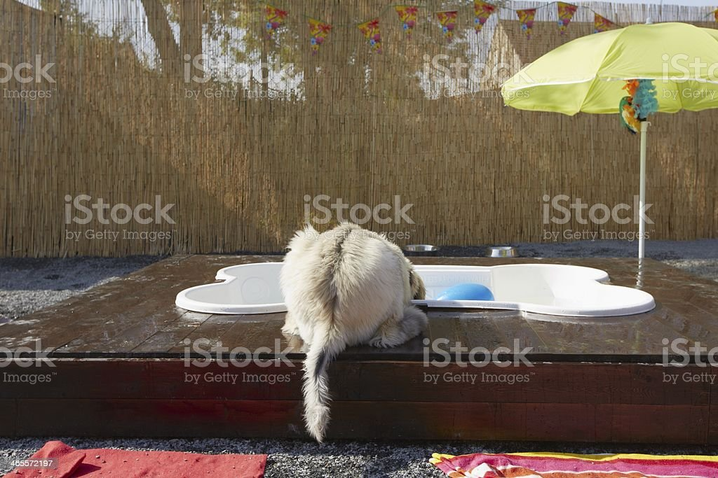 Hot day royalty-free stock photo