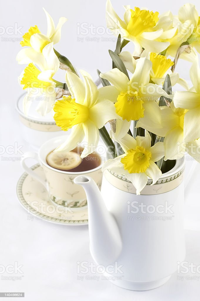 Hot tea with fresh yellow daffodils in white pot royalty-free stock photo