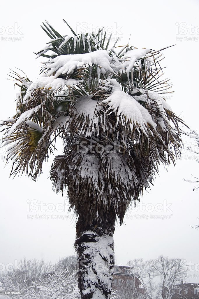 Hot tree, cold weather stock photo