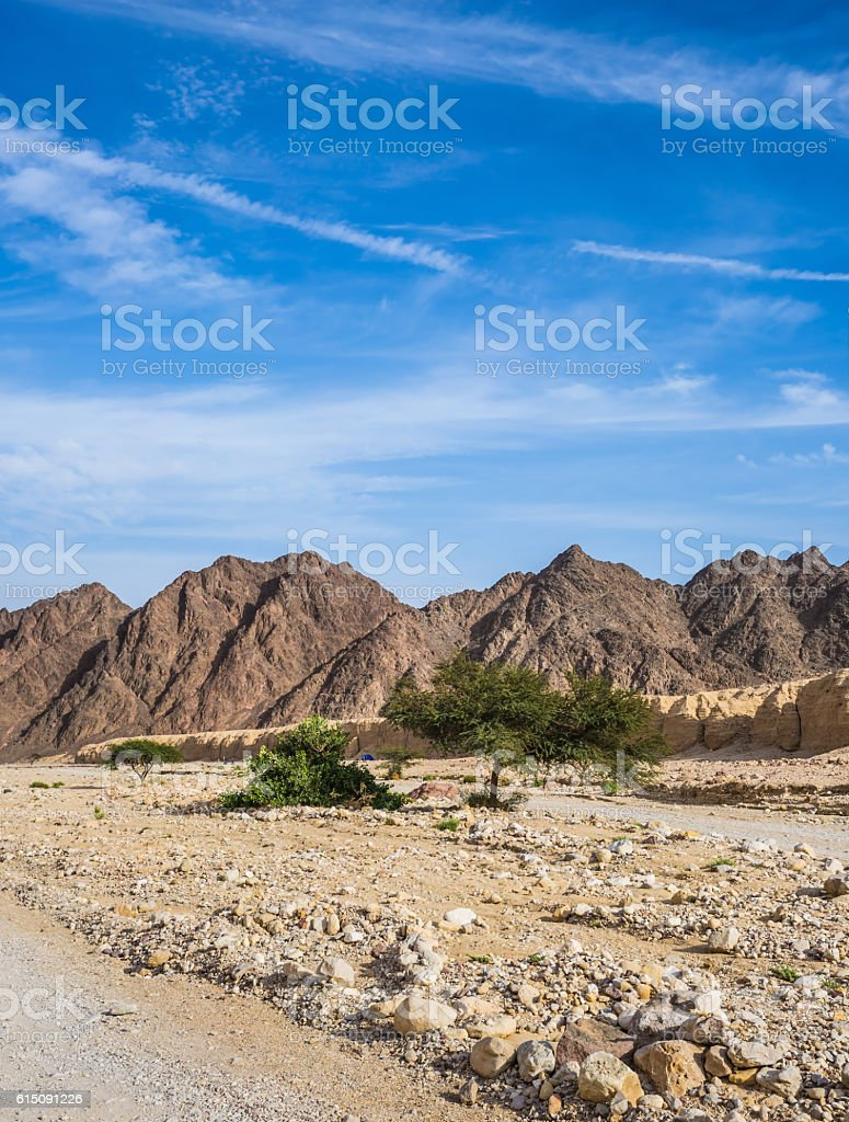 Hot winter in the desert in Israel stock photo