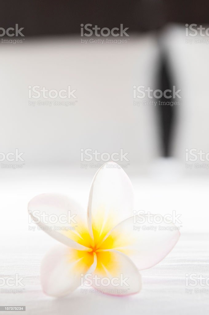 Hotel Room Flower stock photo