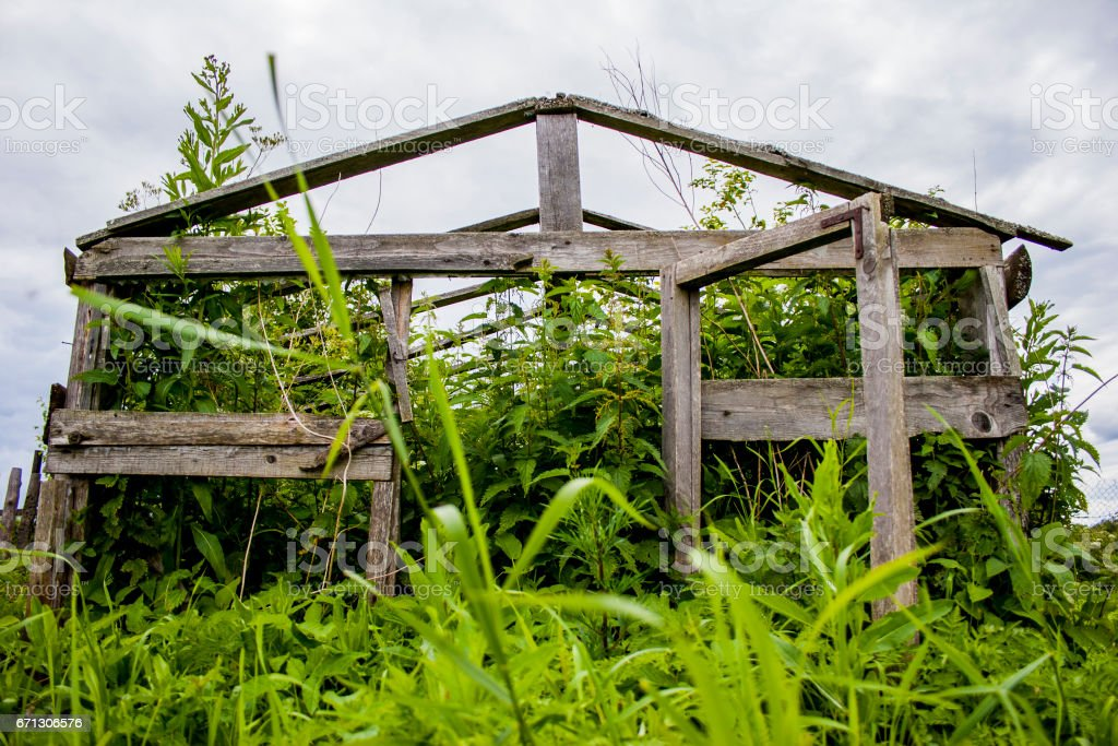 Hothouse overgrown with grass stock photo