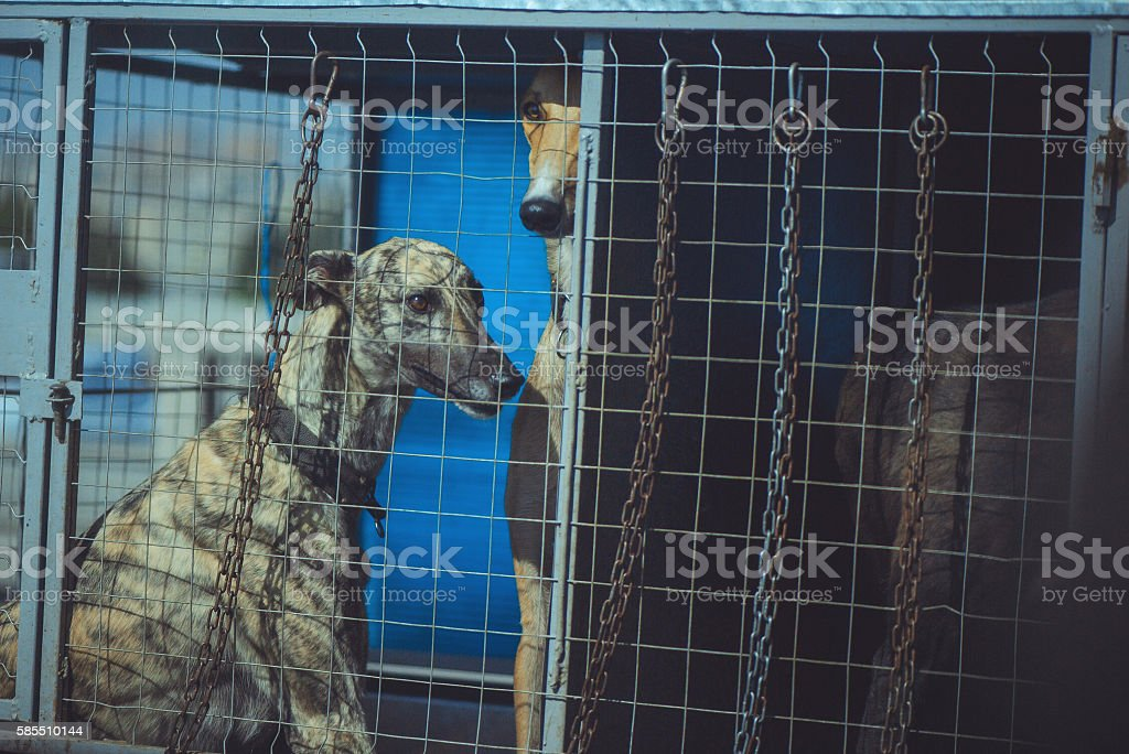 hounds dogs in a cage stock photo