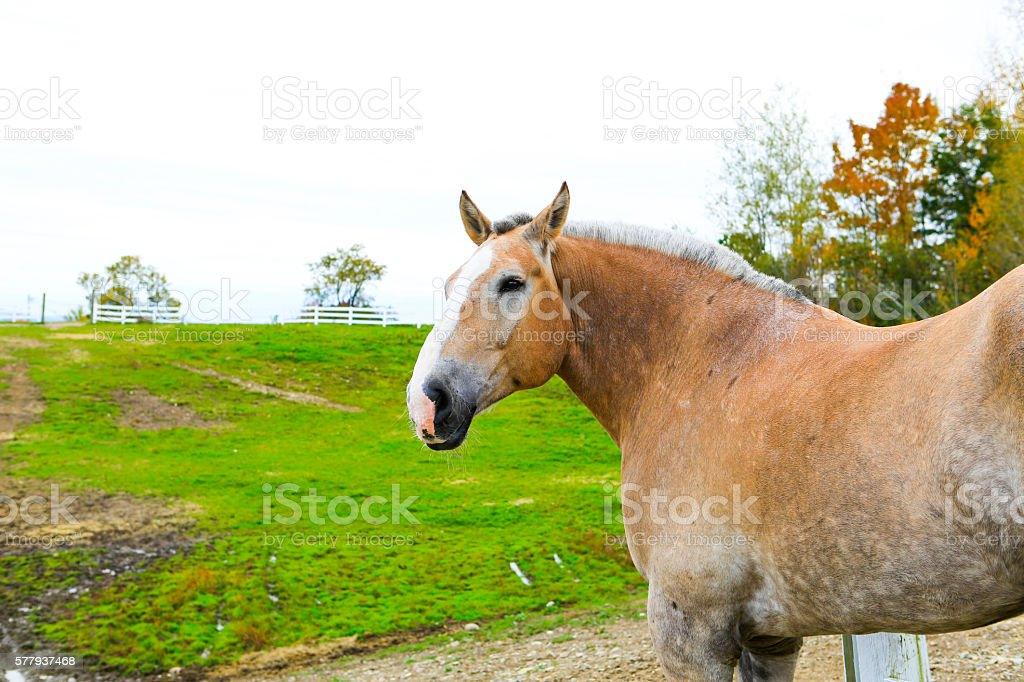 Hourse at the meadow with grass stock photo